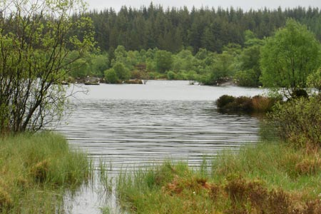 Llyn Elsi, a reservoir in the Gwydir Forest