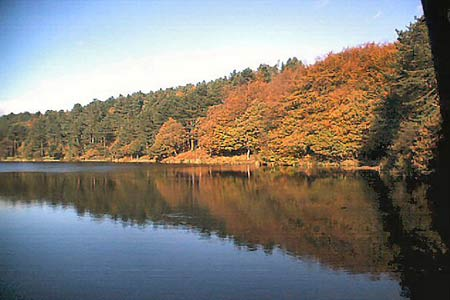 Autumn tints at Roddlesworth reservoirs