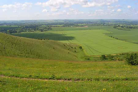 Photo from the walk - Milk Hill the highest point in Wiltshire