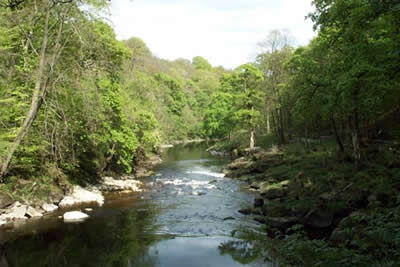 Photo from the walk - Barden Bridge & the Strid from Bolton Abbey