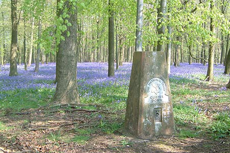 The trig point amongst the Bluebells in Crawley Wood