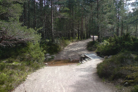 The footpath leading through Rothiemurchus Forest