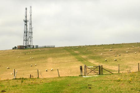 Grazing sheep on Beddingham Hill on the South Downs