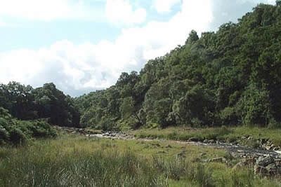 The lower sections of Gunnerside Gill have mature woodland