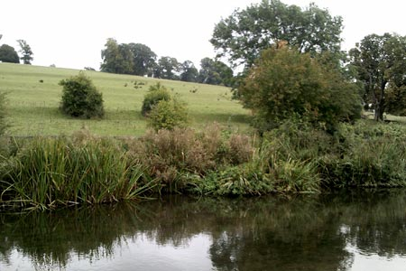 The River Chess at Sarratt