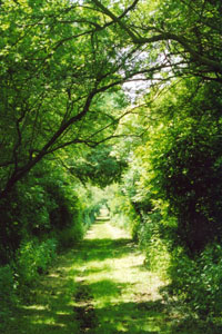 An enclosed path in Hertfordshire