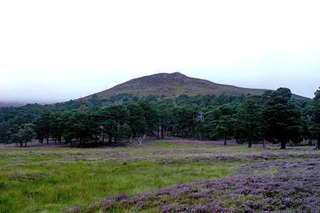 Lower slopes of Derry Cairngorm from base camp