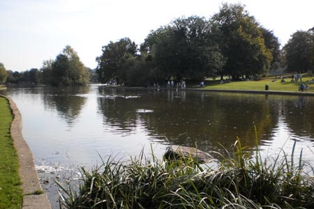 Ornamental lake in Verulamium Park, St Albans