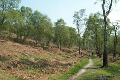 Photo from the walk - Cannock Chase from Milford