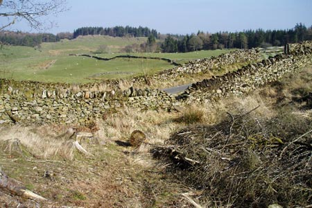 Photo from the walk - Astley's Plantation, Simpson's Ground & Gummer's How