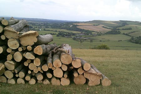 Pile of logs and Amberley in the distance