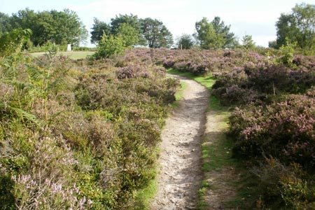 Path leading to the top of Gibbet Hill from the Devil's Punchbowl