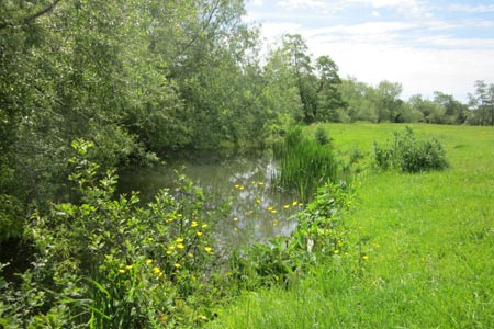 Photo from the walk - Keynsham to Bath on the south side of the Avon