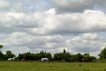 Grazing horses at Bragman's Farm