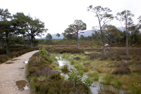 Path through the Rothiemurchus Forest