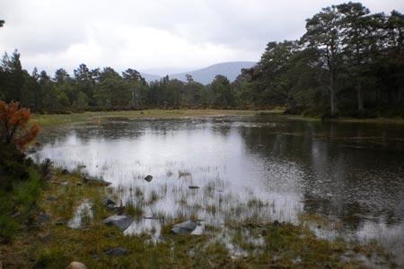 Lochan Deo in the Rothiemurchus Forest