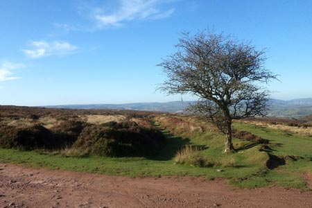 Looking across Weacombe Hill from Bicknoller Post