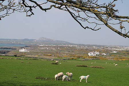 Photo from the walk - Rhoscolyn Headland