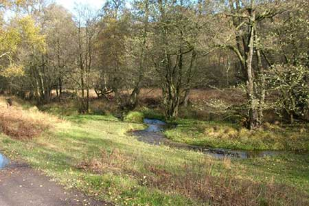 Photo from the walk - Highlights of Cannock Chase from Marquis Drive