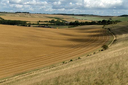 Photo from the walk - West Berkshire downs from East Garston