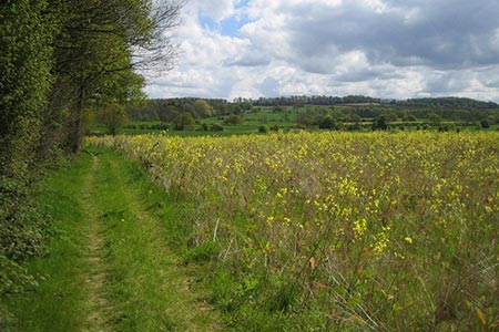 Photo from the walk - Hooton Pagnell from Brodsworth circular