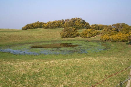 A dew pond alongside the South Downs Way