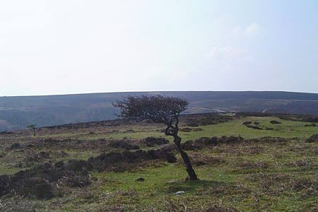 Exposed Quantock Hills make survival tough for trees