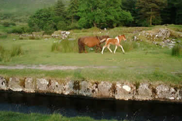 Devonport Leat and Ponies
