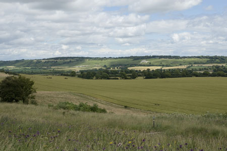 Looking across to the White Lion at Whipsnade