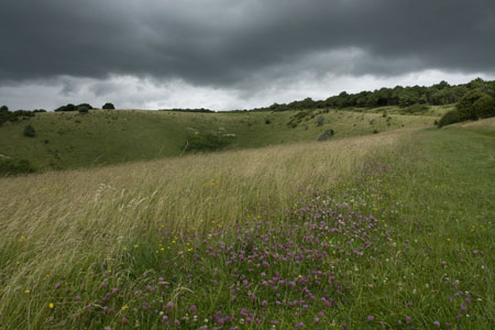Storm clouds and wild flowers at Incombe Hole