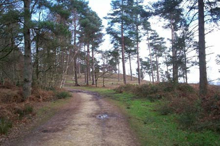 Photo from the walk - Leith Hill circular