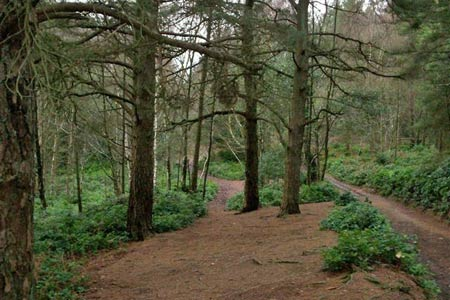 Path descending from Leith Hill