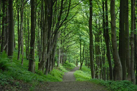 The delightful path through Wood Hill Wood, Tillicoultry