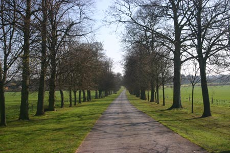 Tree-lined avenue at Nocton