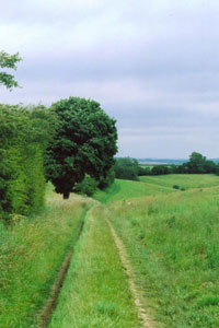 Photo from the walk - Wayram To Fridaythorpe Circular