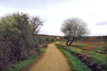 Photo from the walk - A walk in the north west of the New Forest