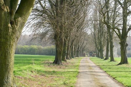 Tree-lined avenue leading to Amersham Road, Beaconsfield