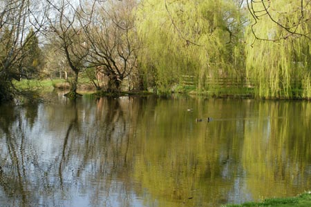 Duck pond at Coleshill, a village in Buckinghamshire
