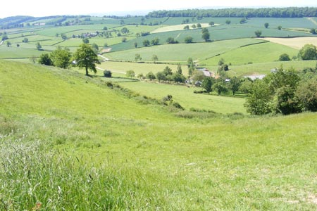 Photo from the walk - The Marcle Ridge from Much Marcle