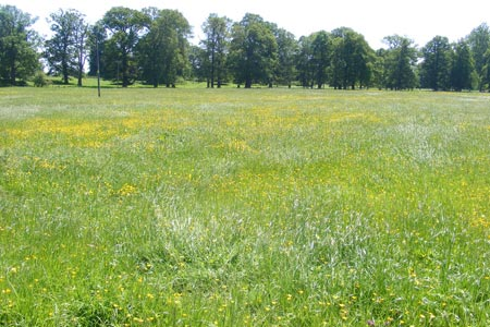 Buttercup meadows approaching Much Marcle church