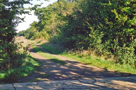 Looking back on the Roman Road along Hasell's Hedge