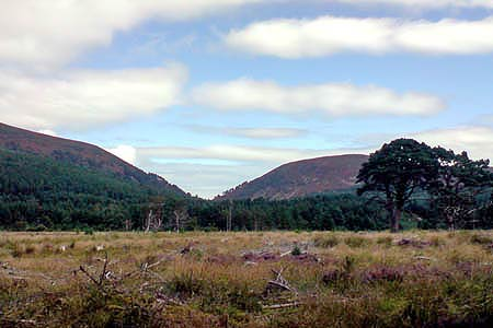 Photo from the walk - Eag a' Chait gap Via Rothiemurchus Lodge from Glenmore