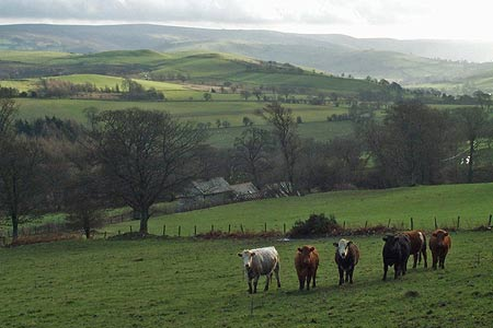 The view southeast from Gatten Plantation to the Long Mynd