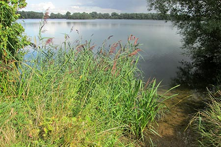 Photo from the walk - Fen Drayton Nature Reserve walk
