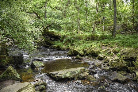 Photo from the walk - Mallyan Spout and Beck Hole from Goathland