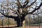 Photo from the walk - Edwinstowe, Sherwood Forest & Major Oak circular