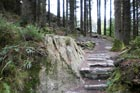 Photo from the walk - A Grizedale Tarn circular